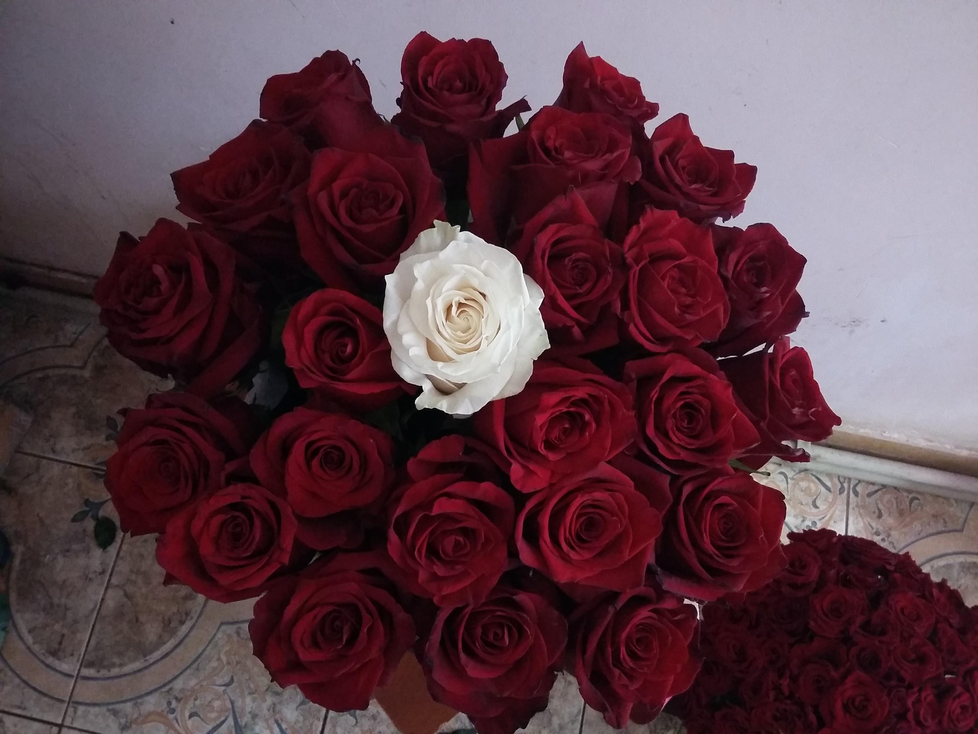 """Фото товара Коробка 21 роза """"Неповторимая"""" в Ужгороде"""