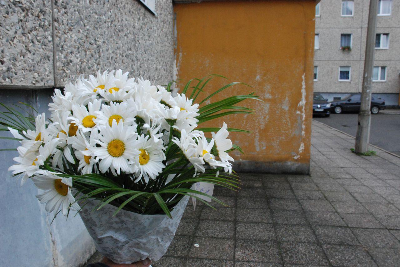 Фото товара 33 ромашки в Ужгороде