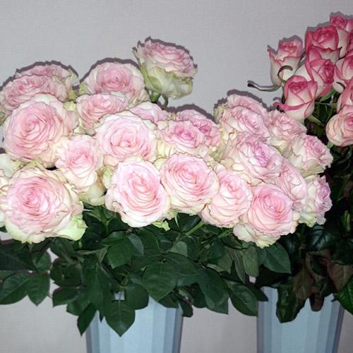 троянди на замовлення фото