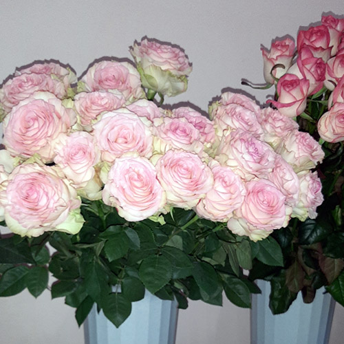розы на заказ фото