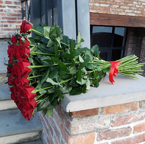 червона троянда у Львові фото
