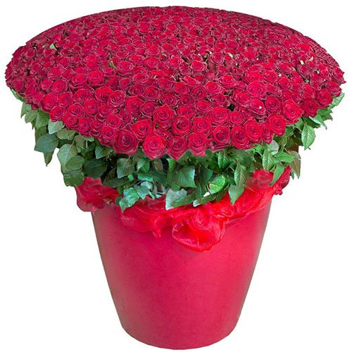 301 червона троянда у великому вазоні фото