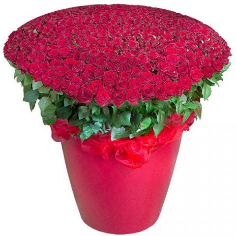 301 красная роза в большом вазоне