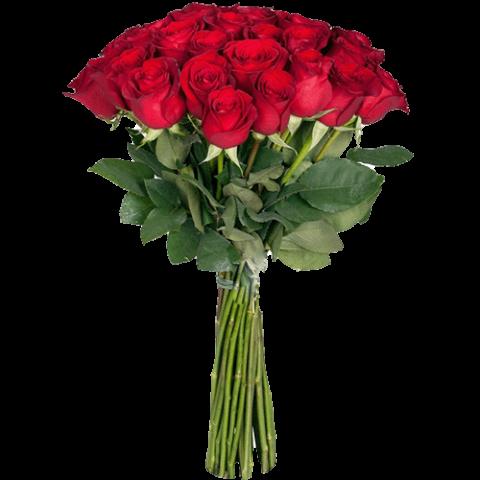 premium_red_rose
