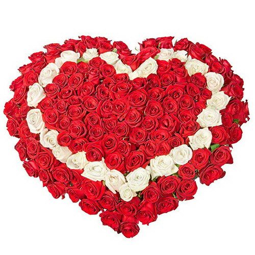 Фото товара 101 роза сердцем - красная, белая, красная в Ужгороде