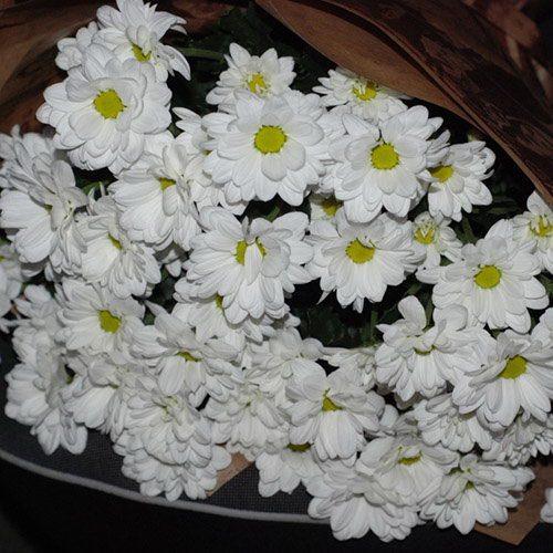 Фото товара 11 білих хризантем в Ужгороде