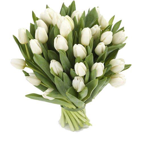Фото товара 25 білих тюльпанів в Ужгороде