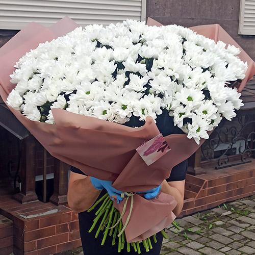Фото товара 51 ромашкова хризантема в Ужгороде