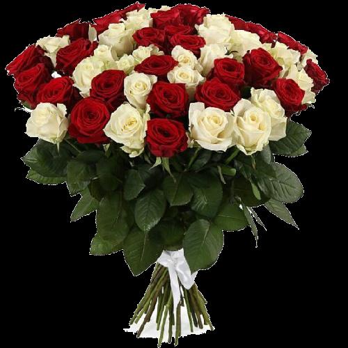Фото товара 51 роза красная и белая в Ужгороде
