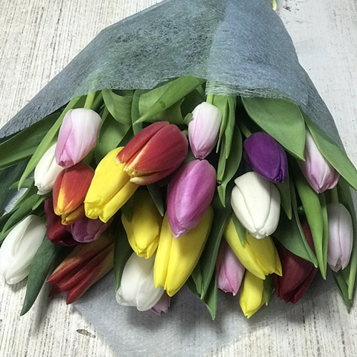 Фото товара 21 тюльпан