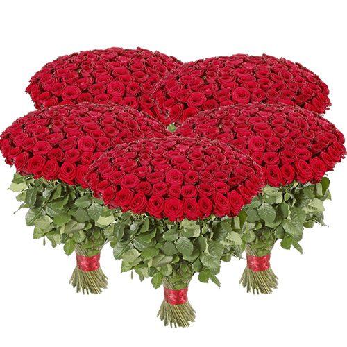 букет 501 красная роза картинка