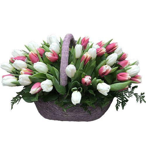 Фото товара 51 біло-рожевий тюльпан у кошику в Ужгороде