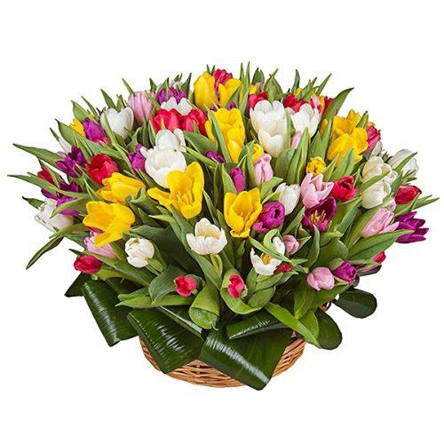 Фото товара 75 тюльпанов микс (все цвета) в корзине в Ужгороде