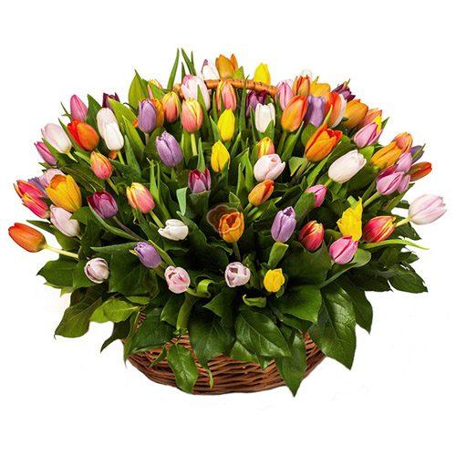 Фото товара 101 тюльпан асорті в кошику в Ужгороде
