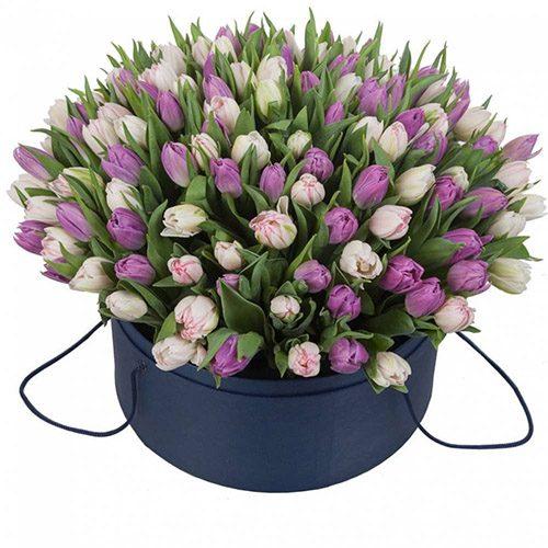 Фото товара 201 тюльпан (два кольори) в коробці в Ужгороде